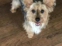 Raylee's story Raylee is a 1 year old yorkie mix that
