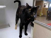 RAYNA's story Very talkative and affectionate, playful