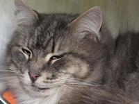 Rayne's story Rayne came to Purrfect Pals through a