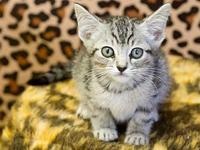 Rayne's story Adoption fee for cats is $65.00 which