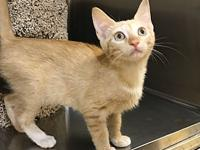 Rayne's story What a cutie! Rayne is an female, orange