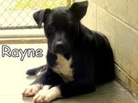 Rayne's story Rayne is one of our shy dogs and our