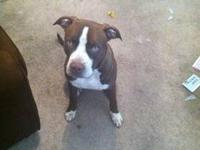 I am moving and have to sell my 7 month old pitbull he