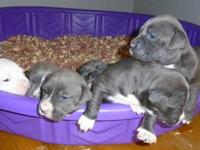 Only 3 Females left $500. Born December 14th. 2012.