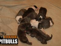 Pups are here! The litter we have been waiting on. Only