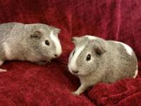 Razzle and Dazzle are two lovely ladies who are both