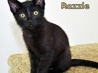 Razzle's story Razzle and his siblings have been in