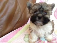 Only 1 Left ... Black/White puppy has a down payment to