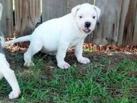I have 2 adorable puppies left born 4/19/2013 and ready