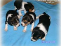6 wks old -2 females & 2 males-born May 18,15- National