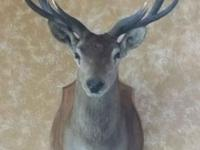 I'm selling a real mounted deer head. Please see