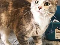Reba's story This adorable cat is Reba. She was