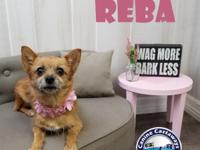 NAME:   Reba BREED:  Chihuahua mix SEX:  female COLOR: