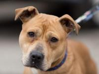 Reba is an alert and happy 3-year-old mixed-breed