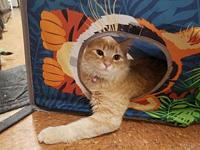 My story Reba is a sweetheart who would love to be an