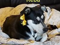 Reba's story Reba is a two year old spayed