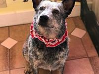 Rec's story For Adoption Rex New addition to our