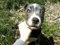 I have a 5 month old blue nose female pitbull up for