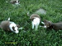 The young puppies are from working moms and dads. We
