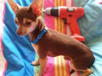 "Valentino ""Tino"" is a handsome, energetic, sweet,"
