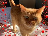 Red's story I am an older cat who was abandoned. I do