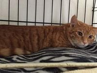 Red's story Red is a 9 month, male kitty who has the