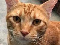 My story Red Kitty is Red Guy's former housemate. Adopt