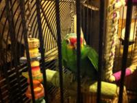 I have a red Lord Amazon parrot needing a new home. He
