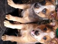I have 2 male puppies needing to find their forever