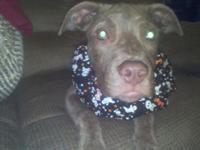 I have a gorgeous male Pitbull puppy for sale. He is