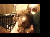I have 2 beautiful male puppies left they were born on
