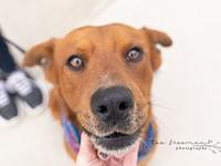 Red's story Opt to Adopt! and give me a chance to love