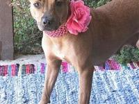 Red Rosie's story My adoption fee is $130 which covers