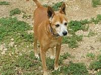 My story   Red run is a 8 year old male terrier.