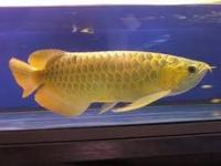 Fresh water tropical aquarium fishes for sale supply