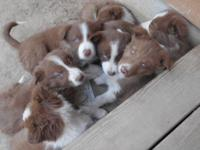 Energies Water: Public. I have 5 sweet Border Collie