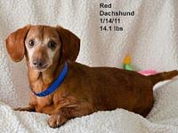 Red's story Please contact Constance
