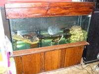 I am selling 1 red ear slider turtle and one yellow