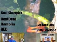 Sire is dual champion...dam is puple ribbon bred... We