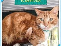 Redford's story You can fill out an adoption