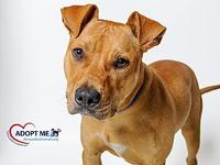 Redford's story Please call  or email