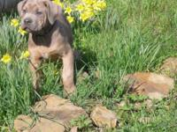 These beautiful puppies were born on 1/13/15. We have