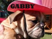 Gabby is a sweet and loving, full of wrinkles Bulldog.