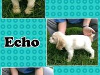 Hey there my name is Echo I am trying to find a loving