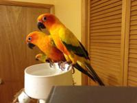 I have the following birds available to loving homes.
