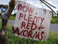 Type: Garden Type: redworms Recycling with REDWORMS . .