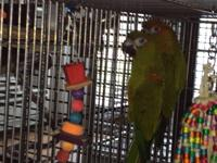 Reece and Dundee are a bonded pair of Hybrid Conures.