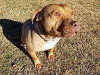 Reece in TN's story DOB 11-7-12 Bulldog mix. Great with