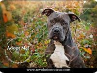 Reece's story Reece is a 2.5 year old Pit Bull mix who