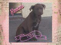 Reeces is a laid back chill dog. Shes friendly, but not